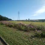 庄内緑地の花