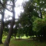 庄内緑地公園枯れ葉