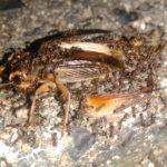 ゴキブリを食べてしまった