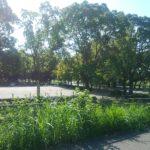 庄内緑地公園夏の風景写真