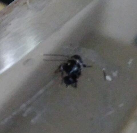 ゴキブリの赤ちゃん